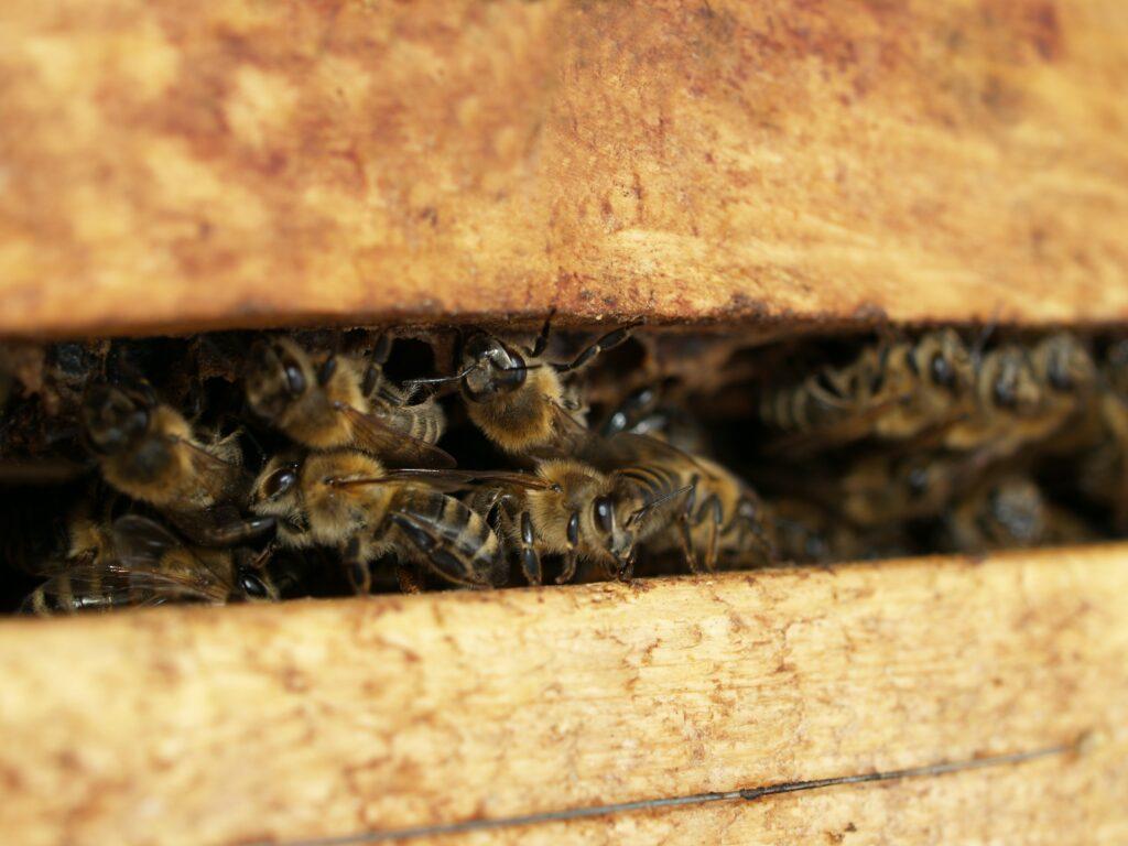 abeille apiculture jardin du vivant
