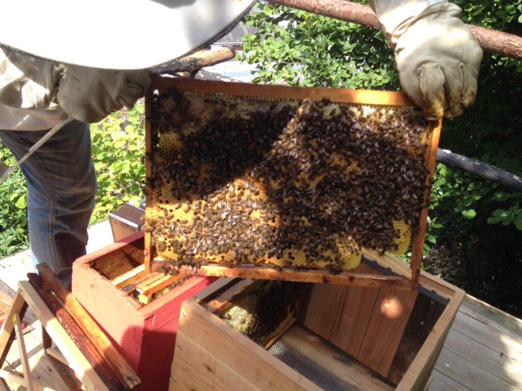 ruche-apiculture